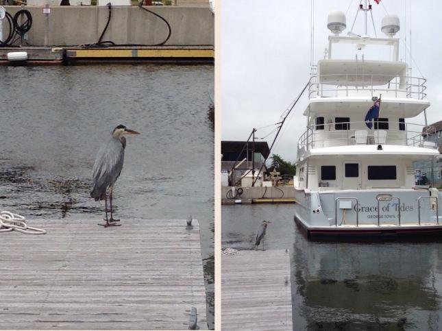 Big boat and heron